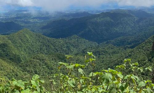 Foto von dem Tropenwald in der Karibik